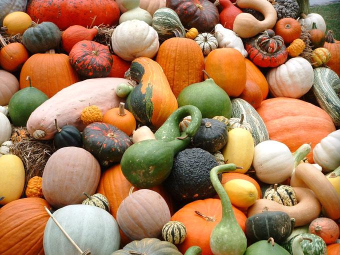 pumpkins-squash-gourds